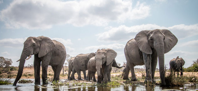 Huch, was macht der Elefant im Office?